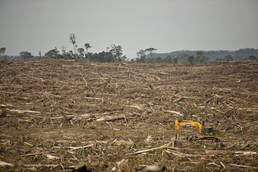 Wilmar palm oil deforestation Picture