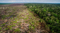 soy palm oil deforestation
