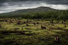 Greenpeace palm oil deforestation