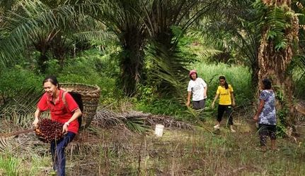 No deforestation palm oil Malaysia