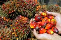palm oil nigeria