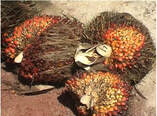 palm oil heart health Malaysia Picture