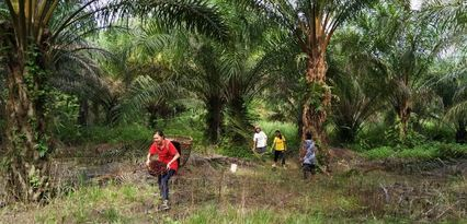 Palm oil small holders Malaysia